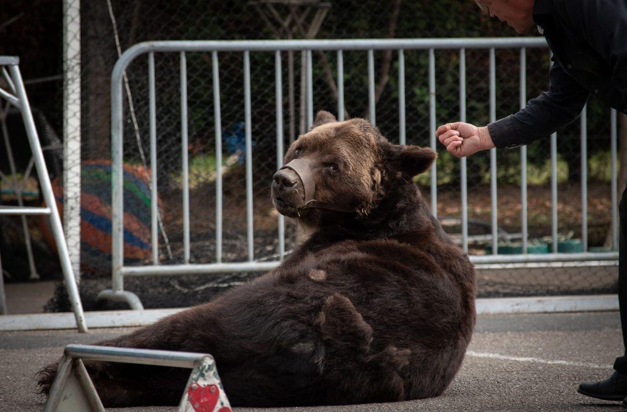 fondation brigitte bardot lettre ouverte petition interdiction ours de spectacle