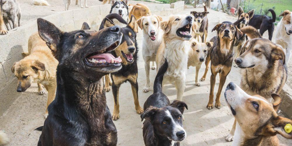 Au Maroc, la FBB participe depuis 2008 à la protection des chiens errants