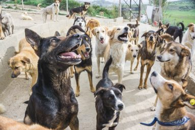 Au Maroc, la FBB participe à la protection des chiens errants