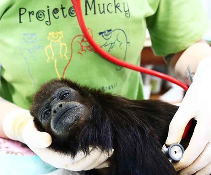 fondation brigitte bardot aide internationale bresil projeto mucky primates