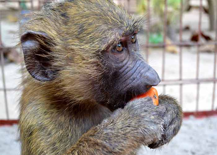 fondation bardot aide internationale afrique benin ato primates