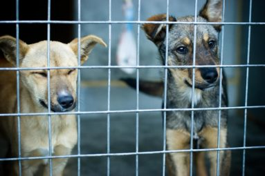 Viande de chien à Tahiti : la lettre ouverte de Brigitte Bardot