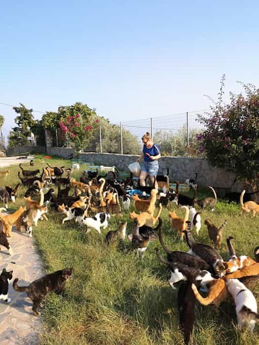 fondation brigitte bardot aide internationale grece chats errants skiathos cat welfare association