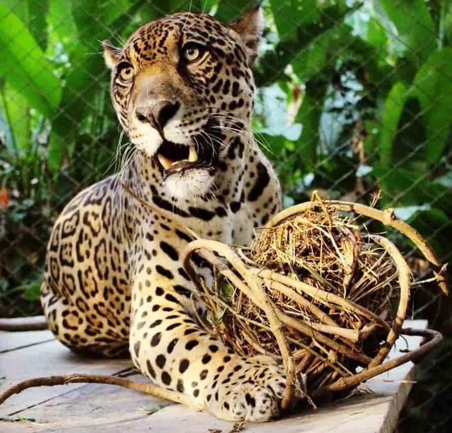 fondation bardot aide internationale bolivie amerique du sud communidad inti wara yassi ciwy faune sauvage