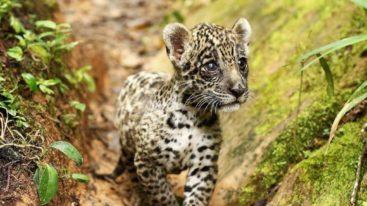 En Bolivie, la FBB aide CIWY à protéger la faune sauvage