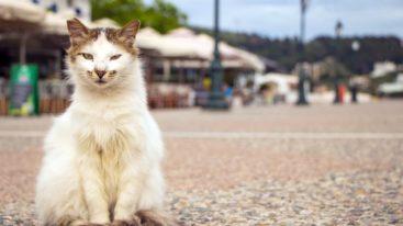 En Grèce, la FBB finance la stérilisation des chats errants de Skiathos depuis 2014
