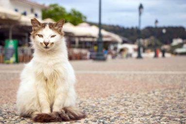 En Grèce, la FBB finance la stérilisation des chats errants