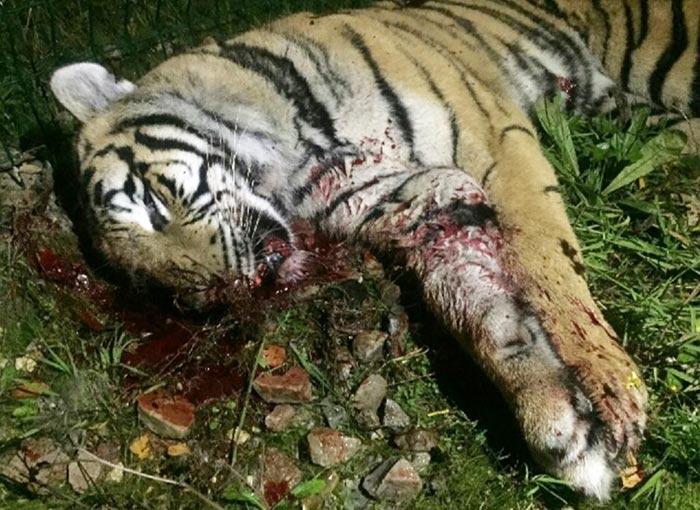 fondation brigitte bardot cirque paris tigresse Mery abattue