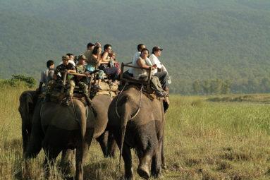 Au Népal, la FBB aide SU4E à protéger les éléphants à touristes