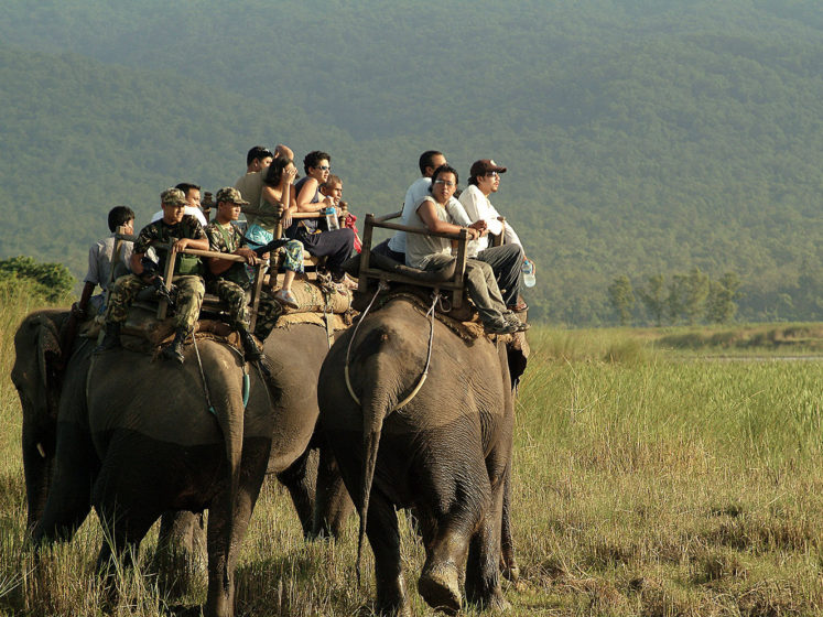 fondation brigitte bardot aide internationale asie nepal elephants