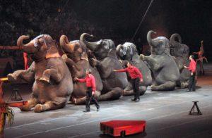 fondation brigitte bardot petition pour un cirque sans animaux