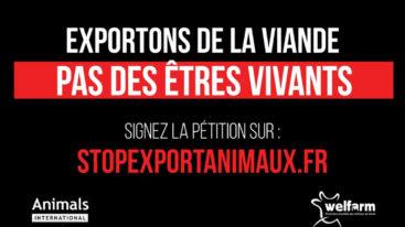 Stop à l'exportation des animaux vivants !