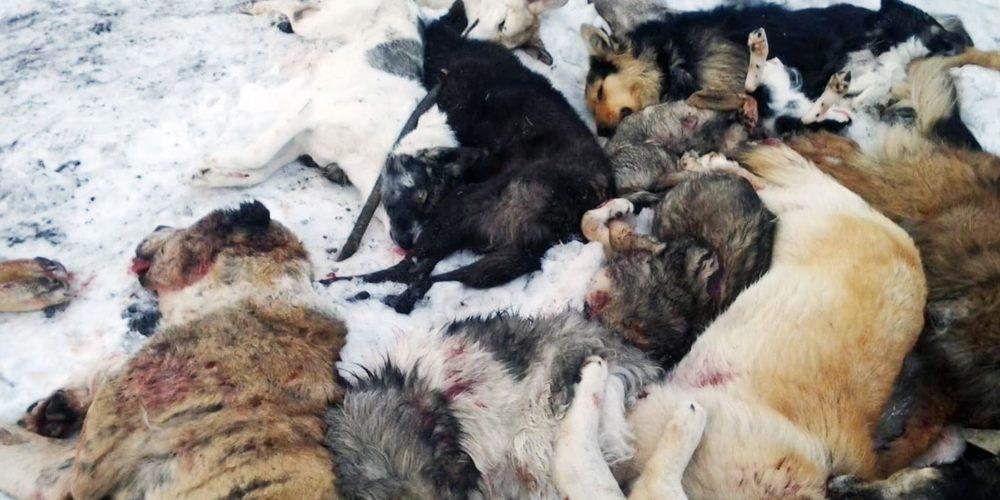 Massacre de chiens errants : lettre ouverte de Brigitte Bardot au Président du Kazakhstan