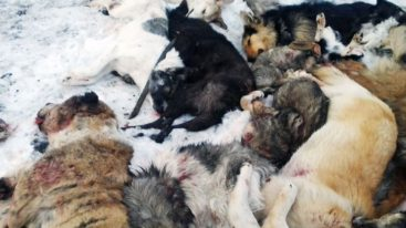 Le Kazakhstan s'engage pour la cause animale suite à la lettre de Brigitte Bardot