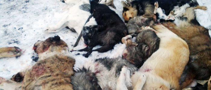 fondation brigitte bardot lettre ouverte kazakhstan chiens errants