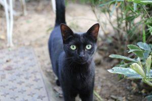 Fondation Brigitte Bardot animal cadeau noel abandon adoption