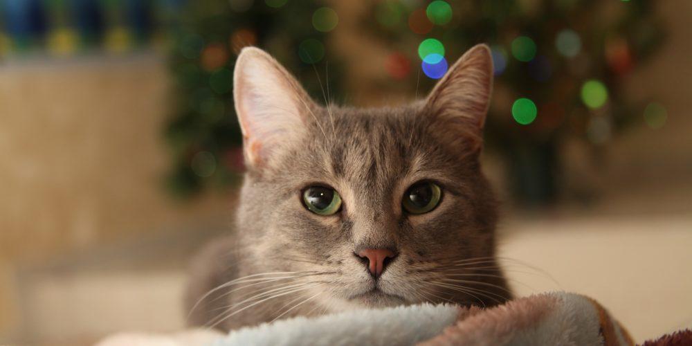 Réveillon du jour de l'An : protégez vos animaux !