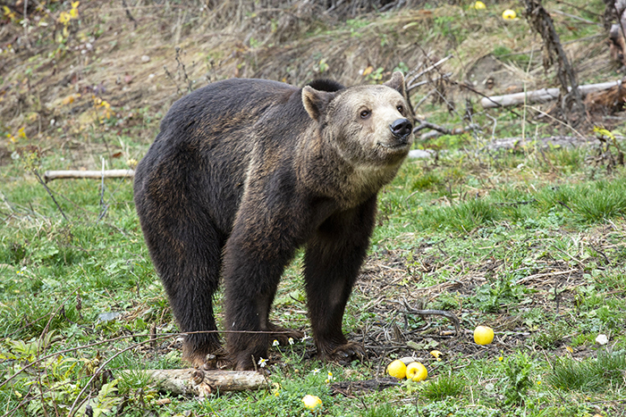 fondation brigitte bardot aide internationle parc belitsa bulgarie ours