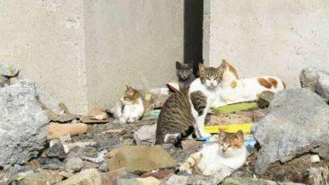En Espagne, la FBB cofinance depuis 2017 la stérilisation des chats errants de Ceuta
