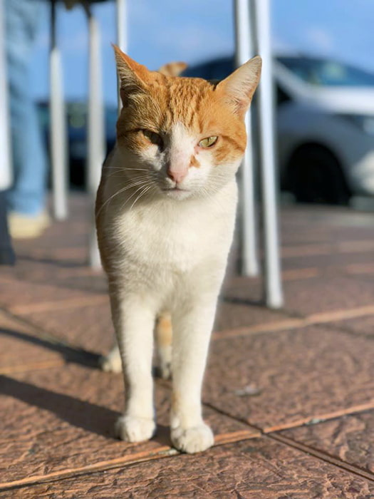 fondation brigitte bardot aide interntionale espagne sterilisation chats errants