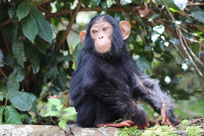 fondation brigitte bardot aide internationale lwiro congo primates