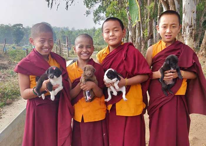fondation bardot aide internationale worldwide veterinary service inde