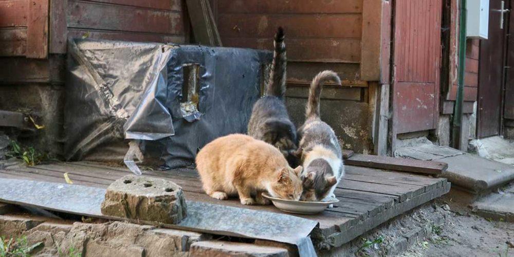En Lettonie, la Fondation aide Animals Friends Fund depuis 2013