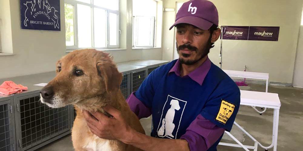 En Afghanistan, la Fondation aide Mayhew à protéger les chiens errants de Kaboul
