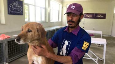 En Afghanistan, la Fondation protège les chiens errants de Kabul avec l'aide l'association Mayhew