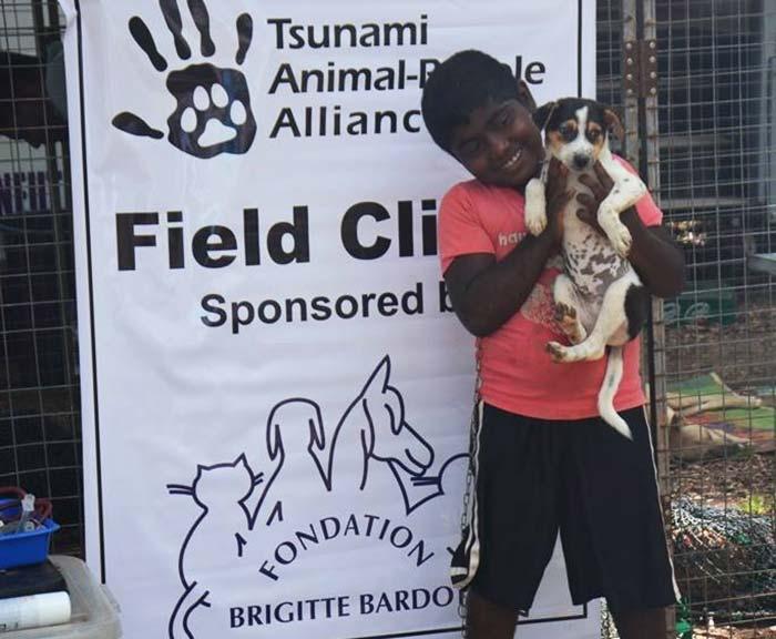 fondation bardot aide internationale animaux tsunami sri lanka