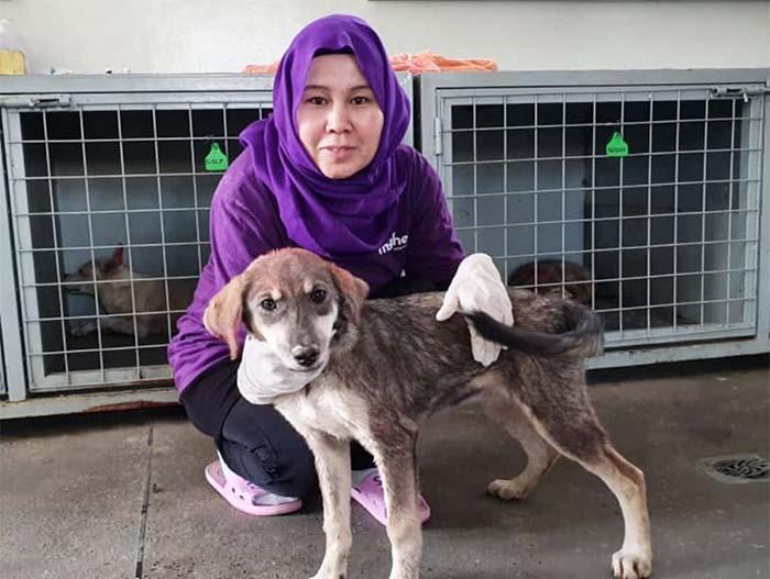 fondation brigitte bardot aide internationale animaux kaboul mayhew chiens errants