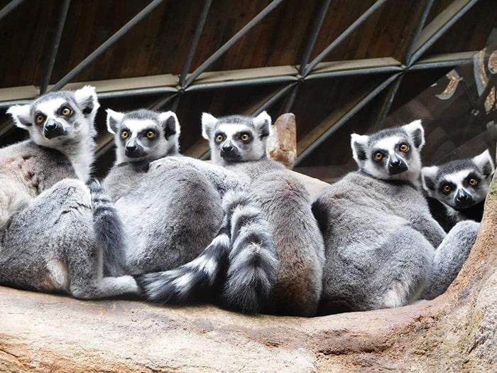 fondation brigitte bardot aide internationale madagascar renamia lemuriens