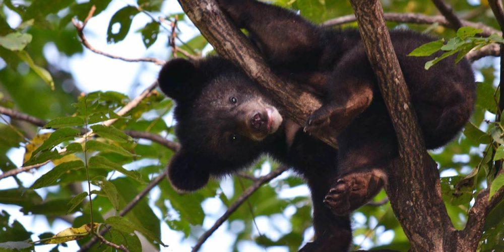 En Russie, la FBB soutient Utyos depuis 2016 pour protéger la faune sauvage