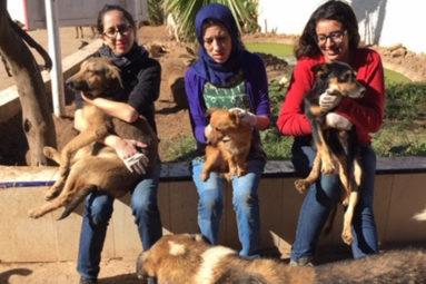 Depuis 2012, la FBB lutte contre la tuerie des chiens errants à Rabat et dans tout le Maroc