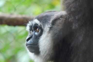 La FBB apporte son soutien à Kalaweit en Indonésie depuis 2000
