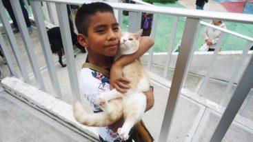 Au Mexique, la FBB aide ANDES à protéger les animaux errants depuis 2008
