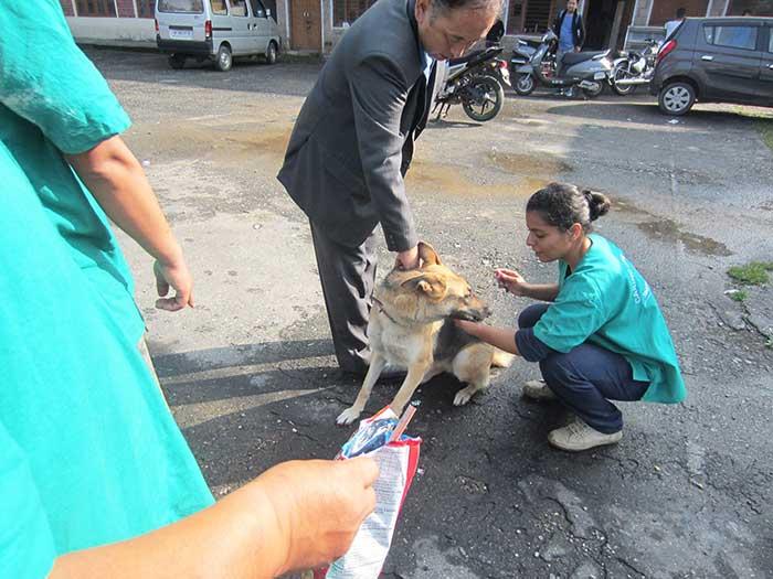 aide internationale ide tibet charity animaux errants sterilisation soins