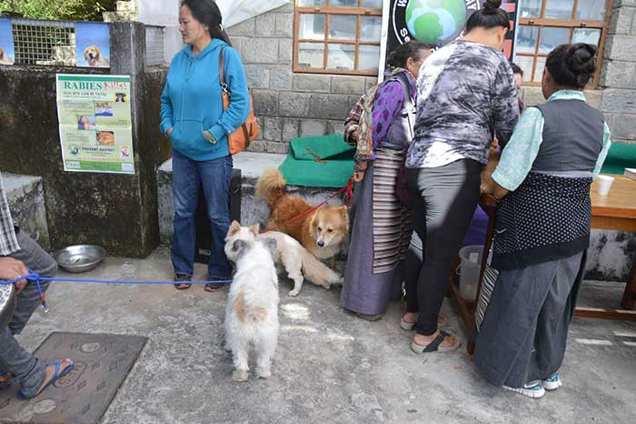 fondation bardot aide internationale inde tibet charity animaux errants