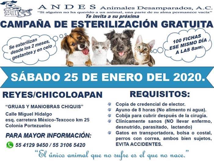 fondation bardot aide internationale mexique andes Animales Desamparados sterilisation