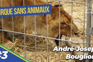 Maltraitance des animaux de cirque : entretien d'André-Joseph Bouglione avec la Fondation Brigitte Bardot (3/9)