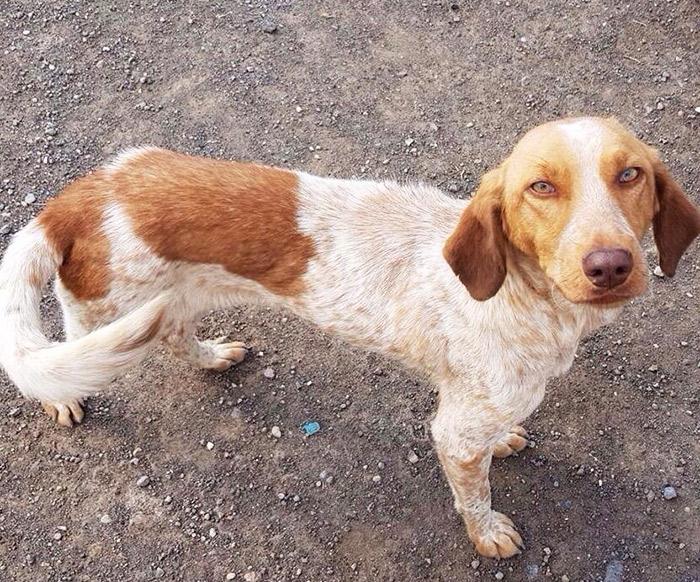 fondation bardot aide internationale armenie pawsitive rescue chiens errants