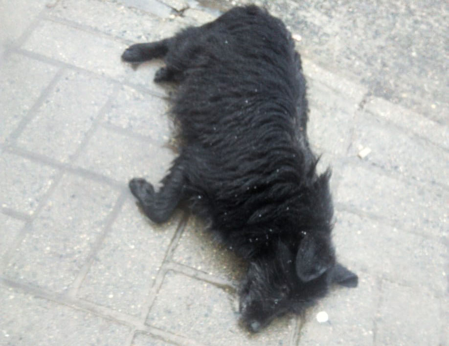 fondation brigitte bardot belarus chats errants