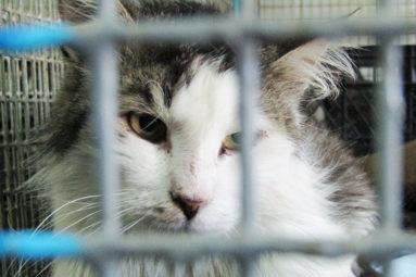 Grâce à la Fondation, le Bélarus annonce la fin des tueries de chats errants
