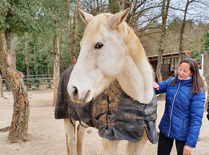 fondation brigitte bardot sauvetage cheval pharaon frejus inondations