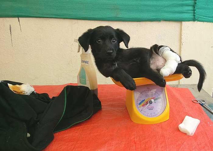 fbb-aide-internationale-inde-sterilisation chiens errants