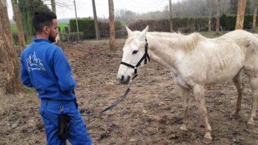 Dans le Nord, la Fondation sauve 17 chevaux dans un état déplorable