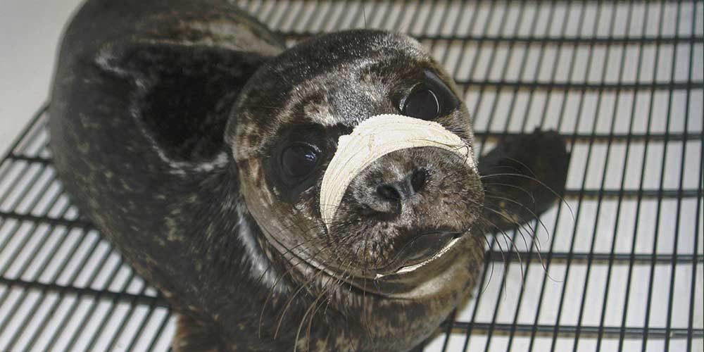 La FBB apporte son soutien au Centre Island Wildlife Natural Care (IWNCC) au Canada
