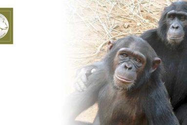 Depuis 2009, la FBB apporte son soutien à J.A.C.K en RDC
