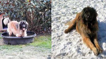 Adieu à la chienne Lilie, mascotte de notre refuge de Bazoches
