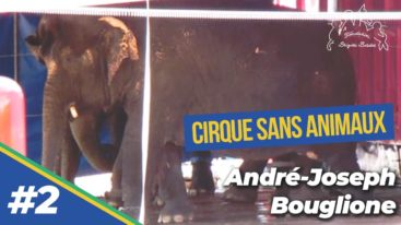 La stéréotypie : un mal-être ! Entretien d'André-Joseph Bouglione avec la Fondation Brigitte Bardot (2/9)